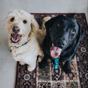 pets at Hospice Hearts